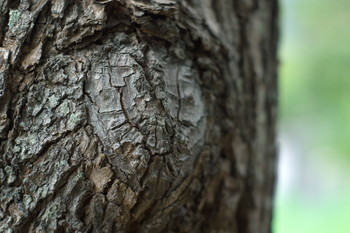 150828-04-tree.jpg