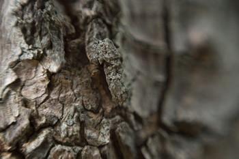 150828-05-tree-macro.jpg