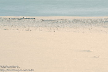 161210-08-beach.jpg