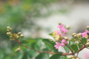150828-06-flower.jpg
