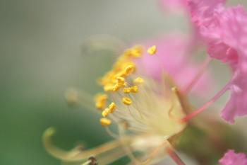 150828-07-flower-macro.jpg