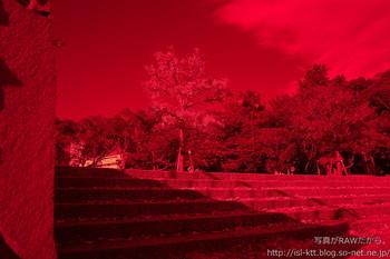 161129-04-park-red.jpg